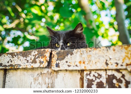 Beautiful black cat with catchy green eyes lying on the old wall and looking directly into the camera