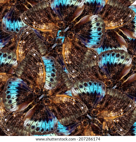 Beautiful Black-tip Archduke butterfly in a great and nice background pattern