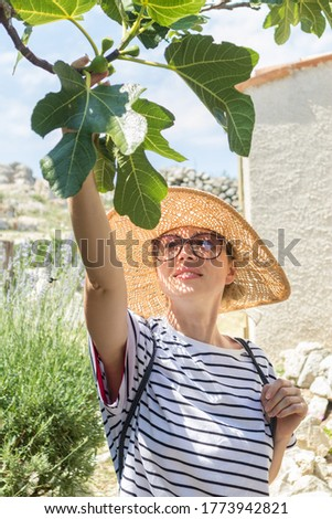 Beautiful blonde young female traveler wearing straw sun hat enjoying summer on Mediterranean cost, picking fruits under a fig tree with lavander flowers and traditional old stone house in background.