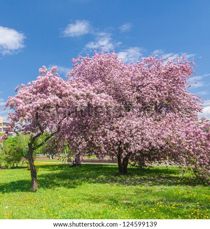 beautiful blooming apple garden in the photo