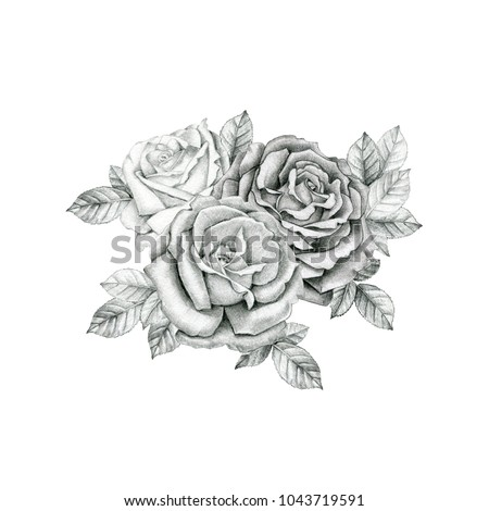 Beautiful blooming bouquet of roses on white isolated background. Illustration for your design.