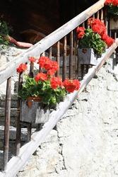 Beautiful blooming geranium along old stairway in Wallis, Switzerland