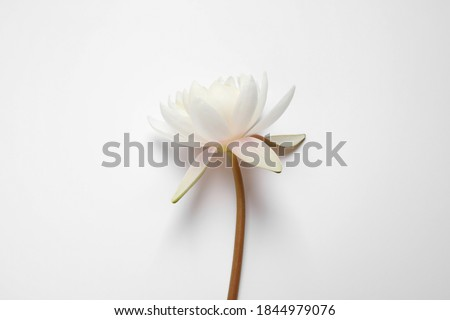 Beautiful blooming lotus flower on white background, top view Foto stock ©