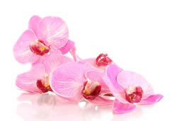 Beautiful blooming orchid isolated on white