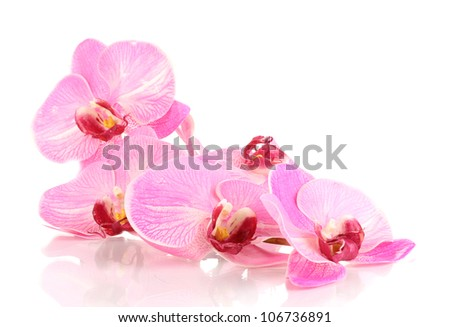 Beautiful blooming orchid isolated on white #106736891