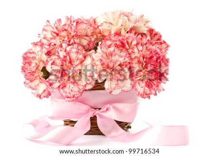 Beautiful blooming pink carnations on a white background