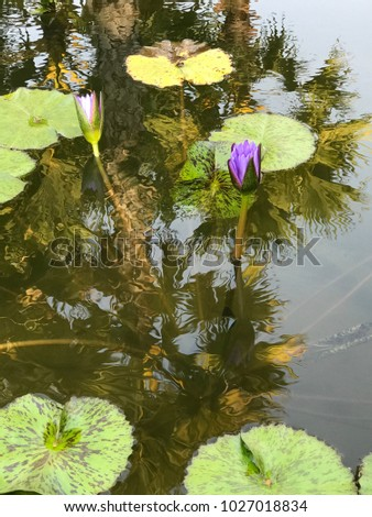 Beautiful blooming pink water Lilly #1027018834