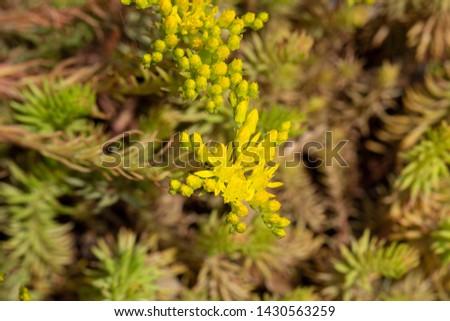 8094d53e0b70e2 Beautiful blooming prick madam in June