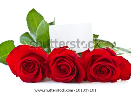 beautiful blooming red roses on a white background