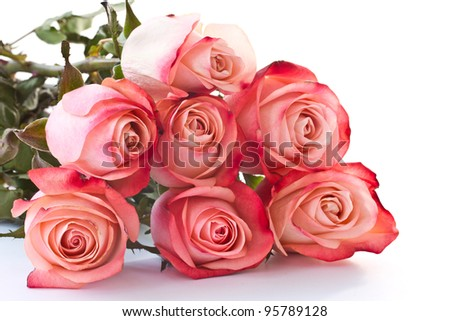 Beautiful blooming roses red on a white background