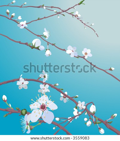 Beautiful blossom flowers Beautiful blossom flowers on a tree.  Raster version