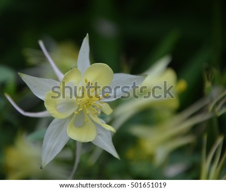 Beautiful blossom white flower with yellow stem close up ez canvas beautiful blossom white flower with yellow stem close up mightylinksfo