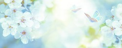 Beautiful blossoming cherry tree, butterfly on light blue sky background in sunlight, shallow depth. Soft vintage pastel toned. Nature springtime sakura flower panorama. Copy space banner.