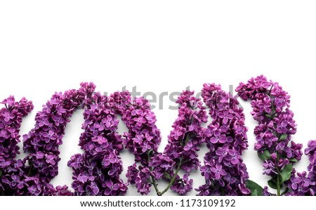 Beautiful blossoming lilac on white background #1173109192