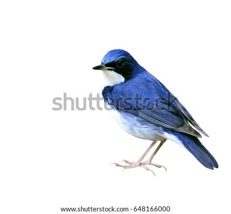 beautiful blue and white bird...