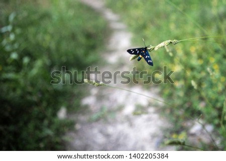 Beautiful blue butterfly close up