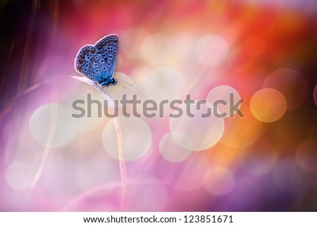Beautiful blue butterfly dream