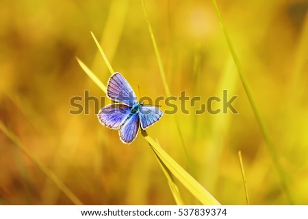 Shutterstock beautiful blue butterfly sitting on a bright Sunny meadow