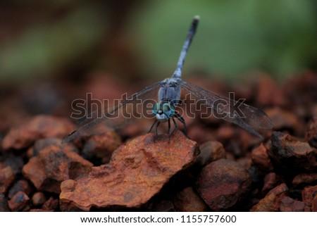beautiful Blue Dragonfly  #1155757600