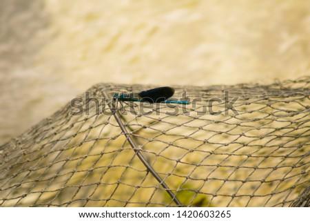 Beautiful blue dragonfly on a fishing net.Beautiful dragonfly sitting on a metal fishing cage.Dragonfly on a metal grid for fishing.