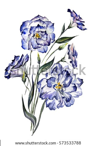 beautiful blue eustoma ...