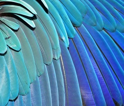 Beautiful Blue Feather Background