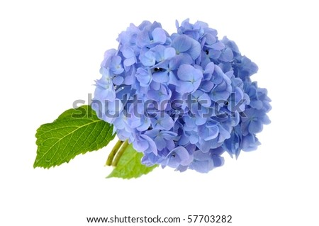 beautiful blue flower on mirror isolated on white