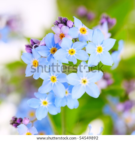 beautiful blue flowers against white background.