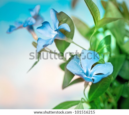 beautiful blue flowers background