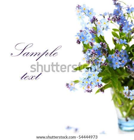 beautiful blue forget-me-nots against white isolated background. (With sample text)