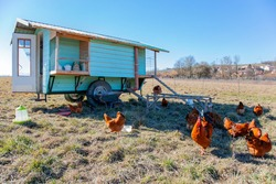 Beautiful blue green painted chicken coop in the field. Free range flock of Chickens and Roosters Outdoors in front of a wooden chicken house on meadow. Free range Chickens and Roosters
