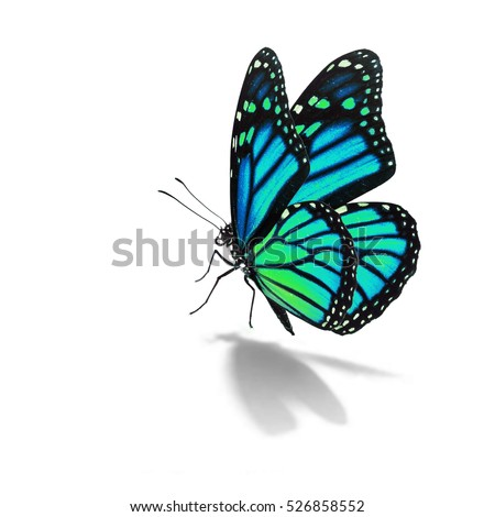 Beautiful blue monarch butterfly isolated on white background #526858552