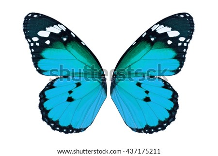 Beautiful blue monarch butterfly wings isolated on white background. #437175211