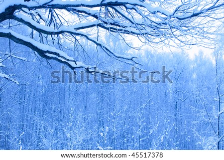 beautiful blue morning in snow wood