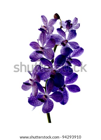 Beautiful blue orchid on green leaf background.