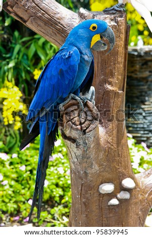beautiful blue parrot on a tree