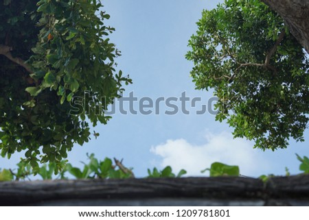 Beautiful blue sky cloud and green trees branches nature background. #1209781801