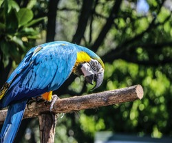beautiful blue sparrow and sparrow is beautiful bird