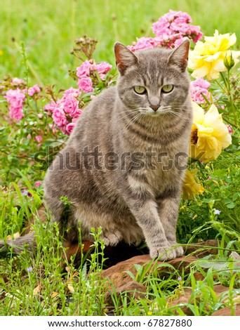 Beautiful blue tabby kitty cat against colorful flower background after rain