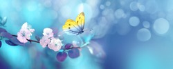 Beautiful blue yellow butterfly in flight and branch of flowering apricot tree in spring at Sunrise on light blue and violet background macro. Elegant artistic image nature. Banner format, copy space.
