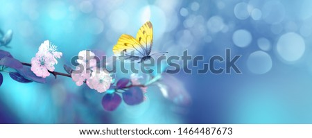 Photo of Beautiful blue yellow butterfly in flight and branch of flowering apricot tree in spring at Sunrise on light blue and violet background macro. Elegant artistic image nature. Banner format, copy space.