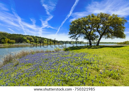 Beautiful bluebonnets along a lake in the Texas Hill Country. #750321985