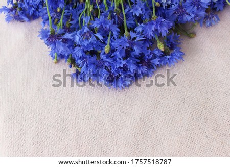 Photo of Beautiful bluet flower bouquet laying on pink background,bunch of cornflower with free copy space for text,top view,flat lay,image for wallpaper,poster,cover design,invitation,greeting card,postcard
