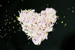 Beautiful blur pink petal of Flower heart-shaped with Black background
