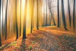 Beautiful blurred autumn calm nature landscape.Sunny autumn scene with road and land covered by orange leaves in empty park.Concept of beauty of autumn nature.Bright colours.Blurred motion effect.