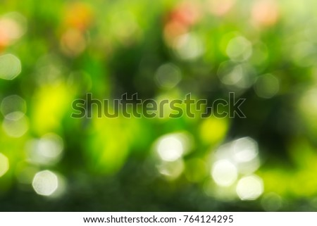 Beautiful blurred bokeh effect of a colorful garden of wet flowers. #764124295