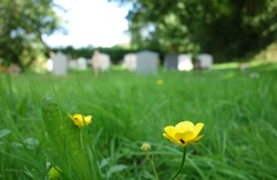 Beautiful blurry photo of green church cemetery graveyard for background use, Christianity concept. Space to add text on unfocussed long green grass, small yellow flowers blooming in spring summer day.