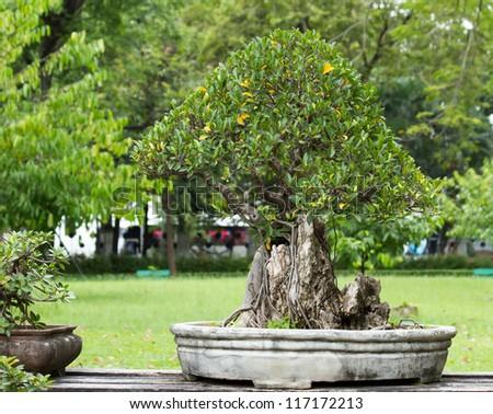 beautiful bonsai in the garden