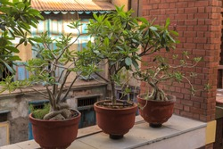 beautiful bonsai plants lined up in a heritage hotel