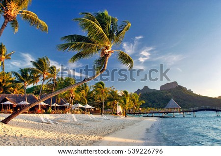 Beautiful Bora Bora sunset sunrise on the beach, with palm trees, mountains background